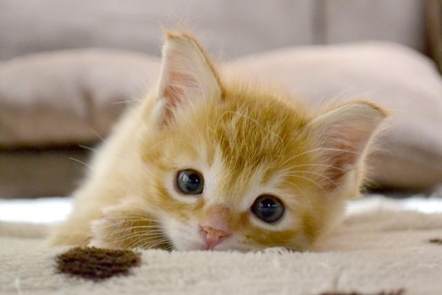 子猫 ぼくとニケ